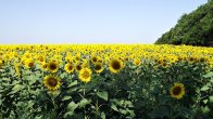 artsyz'kyi_district _odessa_oblast _ukraine_-_panoramio2122547456..jpg